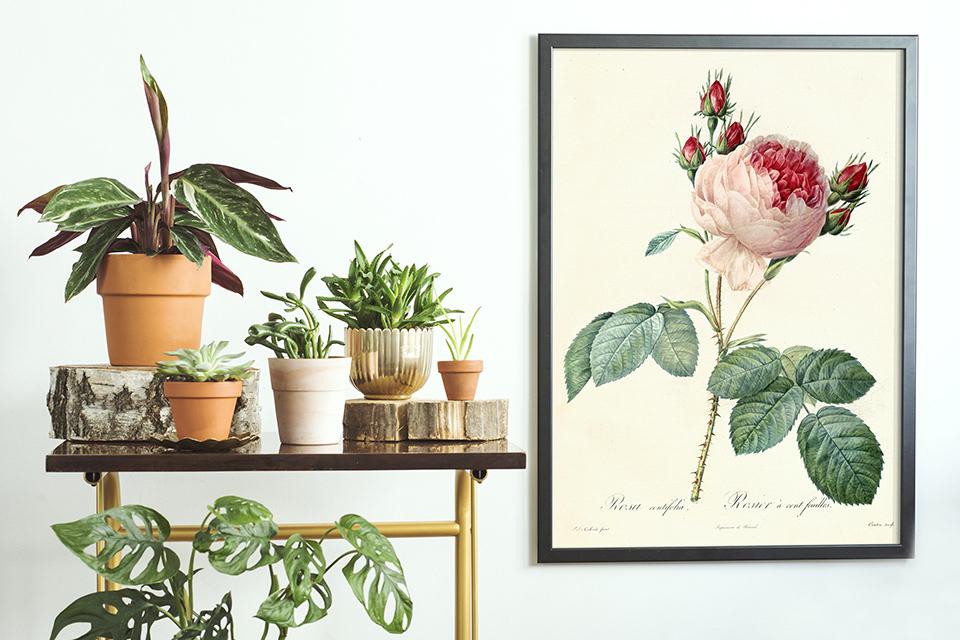 Botanisches Poster mit Rose