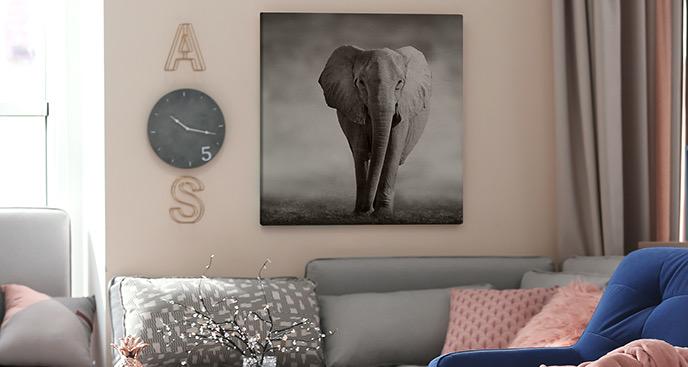Bild Elefant auf Savanne