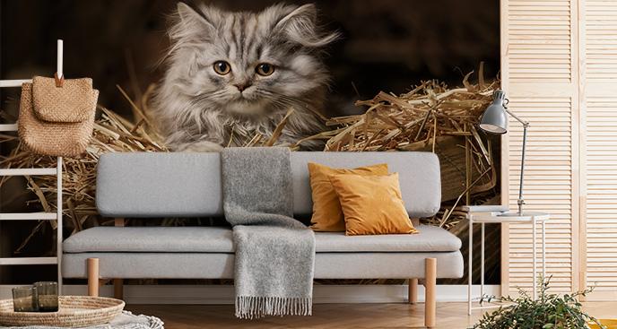 Fototapete mit einem kleinen Kätzchen