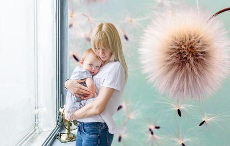 Fototapete Pusteblume Blumen