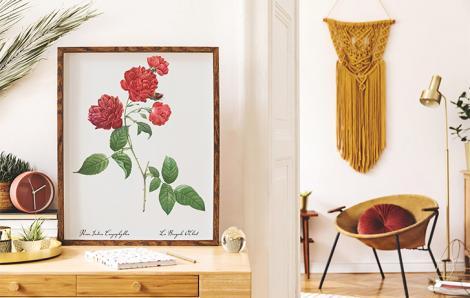 Poster mit bengalischer Rose