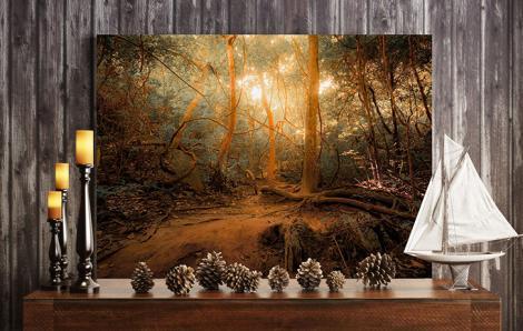 Waldlandschaft Bild